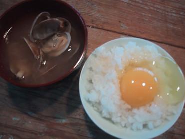 タマゴが美味い。それは命の源だから!! 安全な卵は健康な鶏が産む!